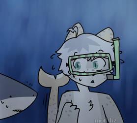 MISTER SHARK????