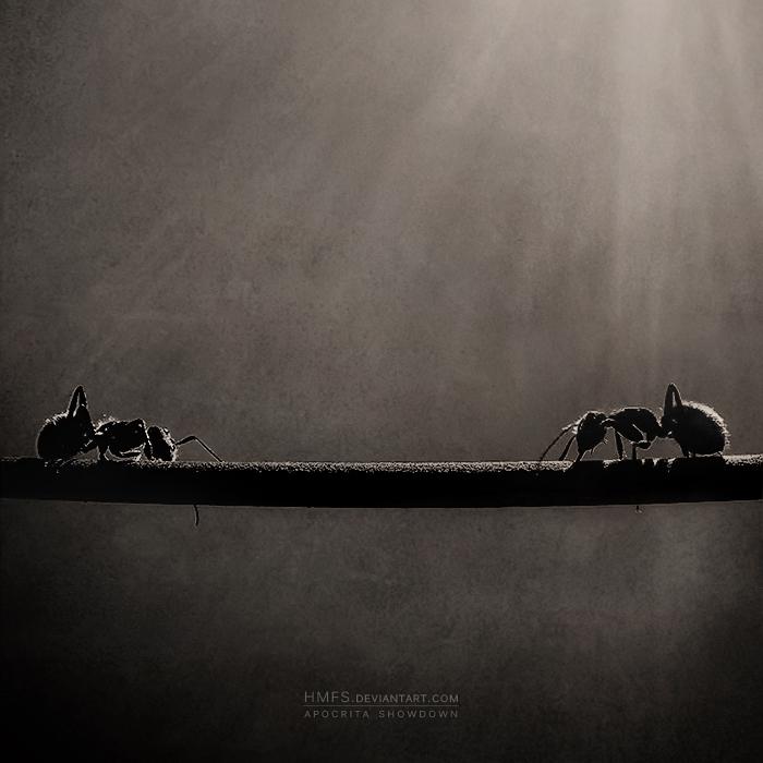 Apocrita Showdown by Miguel-Santos