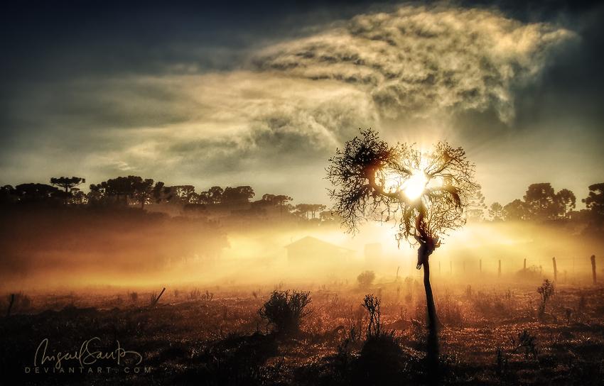 Tree of Lite by Miguel-Santos