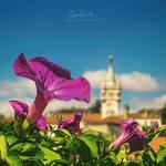 Springtime Glory by Miguel-Santos