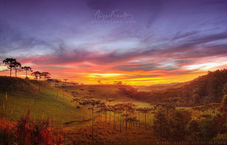 Araucaria Vale by Miguel-Santos