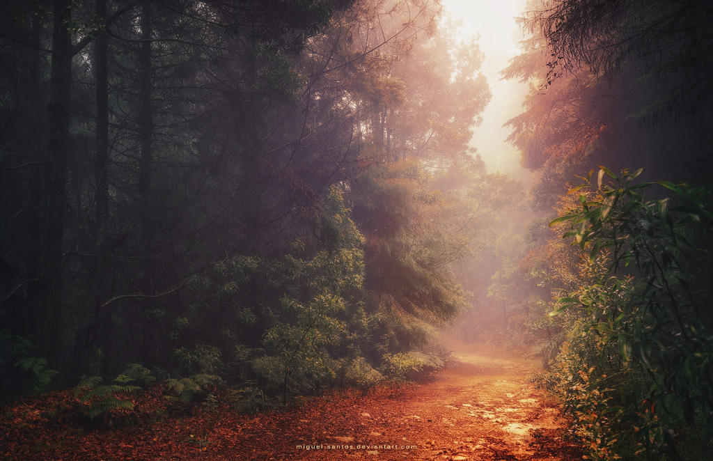 Back Into the Fall by Miguel-Santos