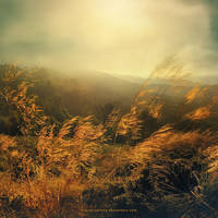 morning breeze by Miguel-Santos