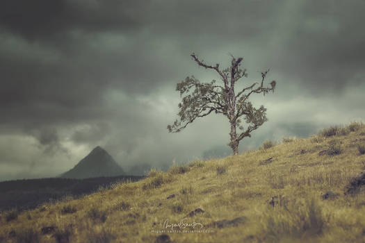 Monolithic Tree by Miguel-Santos