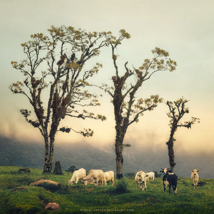 Morning in the Highlands by Miguel-Santos