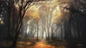 Into the Forest - 2020 Calendar by Miguel-Santos