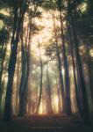 Greenlightwoods