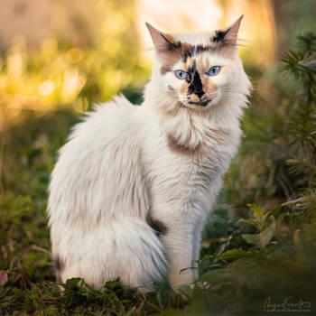 Precious Alice