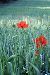 Poppy's Choice by merkero