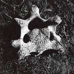 Bones by merkero