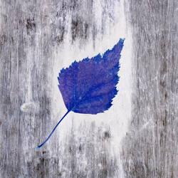 Blue Autumn by merkero