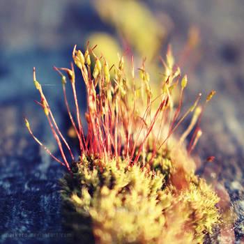 Moss by merkero