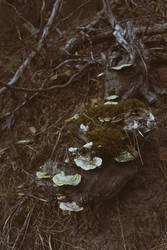 Skulking In The Woods I by merkero