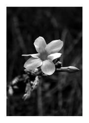 Still Grey From Winter... by LagoonDragon