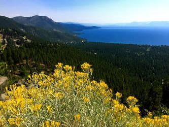 Lake Tahoe Nevada iPhone Landscape. by LisaLovelyLPA