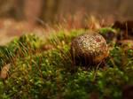 Musssshroom by koral-galaxis
