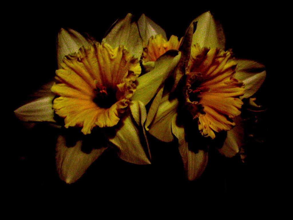 Flowers, flowers, flowers by yachoo