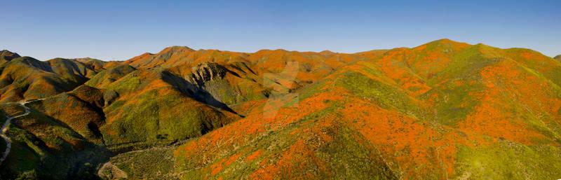 Walker Canyon - Poppy Fields