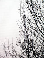 Pom pom trees by allyekhrah-stock