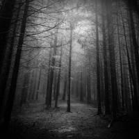 Through the Mist I by PixieZombescu