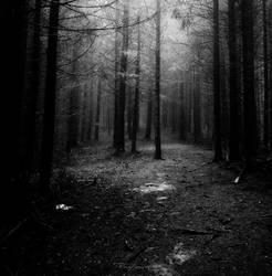 Through the Mist II by PixieZombescu