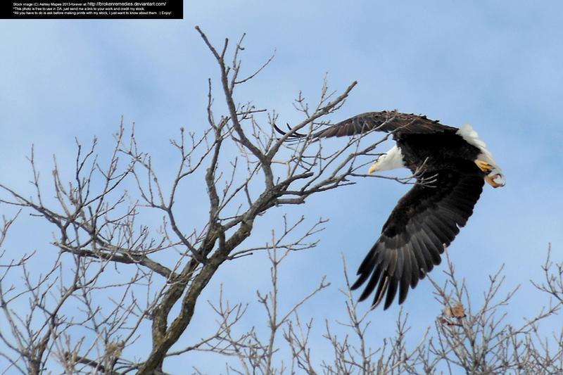 Eagle3 by BrokenRemedies