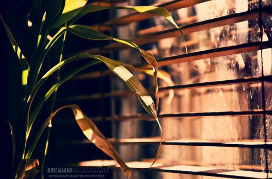 windowed plant