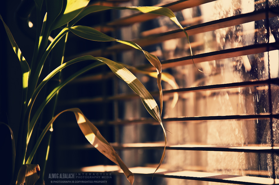 windowed plant by enemia