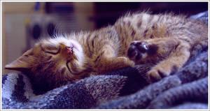 Sweet Fluffy Dreams