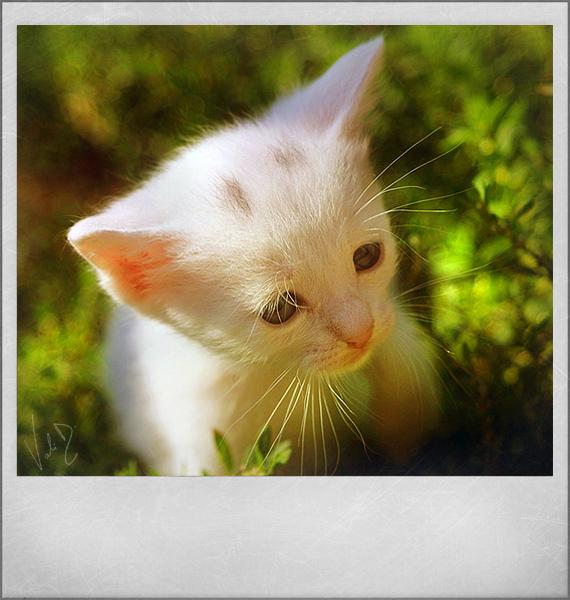 Kitty in nature by ValentinaKallias
