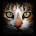 eyes by ValentinaKallias