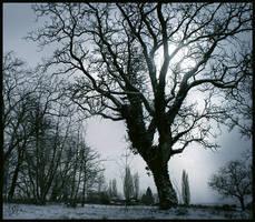 -Winter- by ValentinaKallias