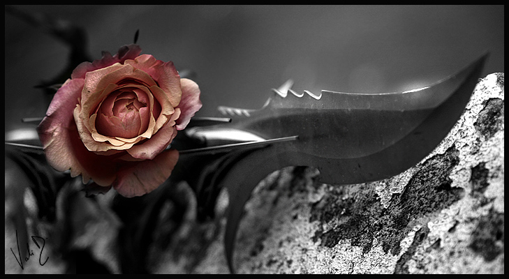 sharp rose by ValentinaKallias