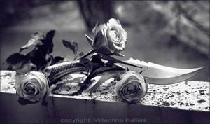 --roses--