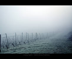 The vine by ValentinaKallias