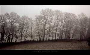 Army of trees by ValentinaKallias