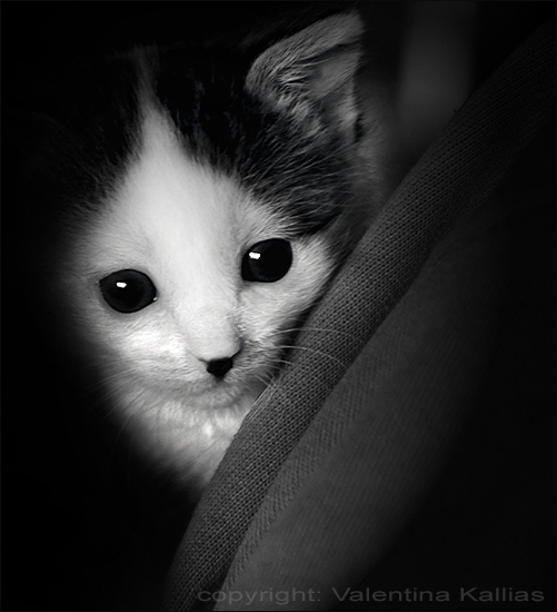 Little Spooky by ValentinaKallias