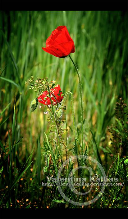 cliche poppy by ValentinaKallias