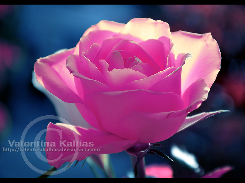 cotton candy by ValentinaKallias