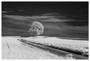 Scheuerfeld 09 (infrared) by joachim-hagen