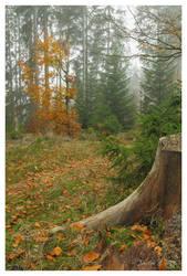 Fichtel Lake Forest