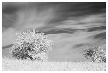 Tennach (infrared) by joachim-hagen