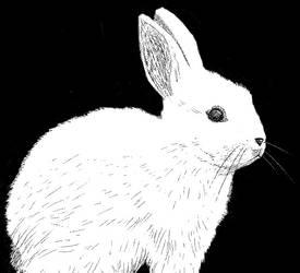 Baby Rabbit Drawing