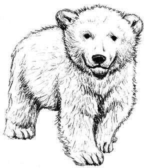 Baby Bear Drawing