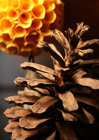 Dry Nature, Paper Flower by tiptopland