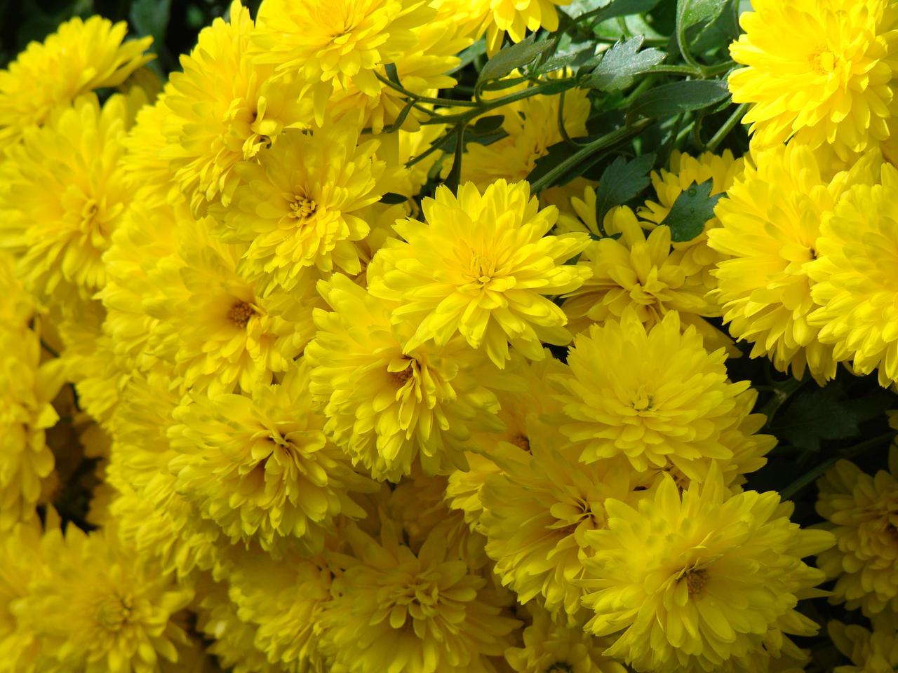 Spring Joy by lcshaver06