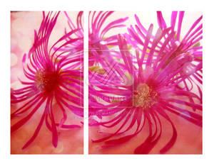 Pink by karemelancholia