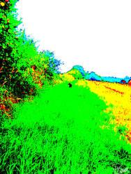 Dog near the field by Felizias