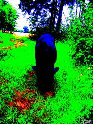 Dog near the forest by Felizias