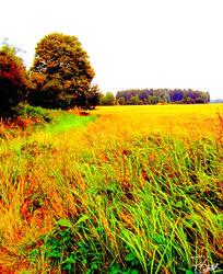Field 'n' forest by Felizias